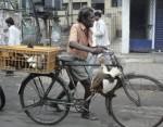 Headed to market